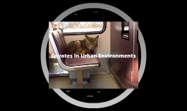 Impact of Coyotes in Urban Enviornments