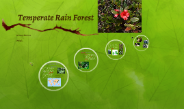 Temperate Rain Forest