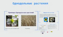 Copy of Однодольные