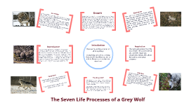 The Seven Life Processes