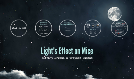 Light's Effect on Mice