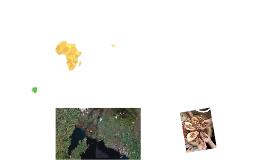 Congo 2014 40min