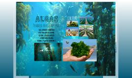 Copy of Algas