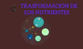 Copy of TRASFORMACION DE