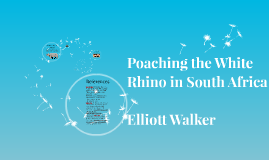 Copy of Poaching the White Rhino in South Africa