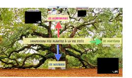 Thème 1A-Chp5 : Adaptation des plantes à la vie fixée