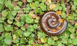 Spring 2016 Arthropod Biodiversity in PPZ