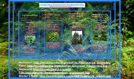 6.05 Plant Kingdom Diagram Assignment