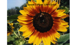 Lesson 2 Plant Life Cycles
