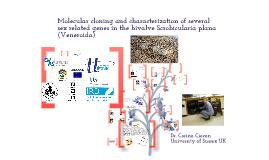 Intersex in Scrobicularia plana