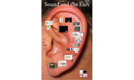 Lecture 8: Sound and the Ears