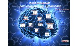 Kora mózgowa - podział wg Bordmana