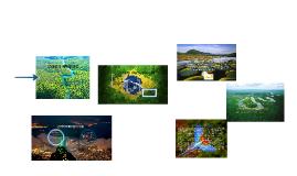 Copy of 브라질의 에탄올산업