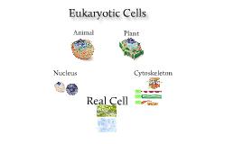 Eukaryotes Jason Carlson