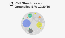 Cell Structures and Organelles-E.W 10/20/16
