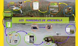 Copy of LOS   HUMEDALES DE  VENTANILLA