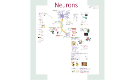 Communication 4: Neurons