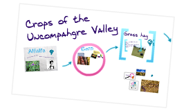 Copy of Crops of the Uncompahgre Valley