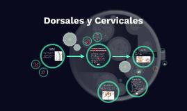 Dorsales y Cervicales