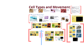 NBO 2 Cell Types and Movement