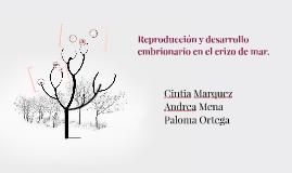 Copy of Reproduccion y desarrolo embrionario en el erizo de mar