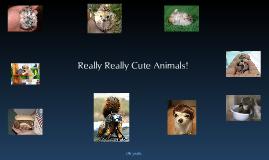 Pretty dang cute animals
