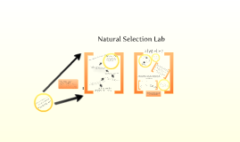 Copy of Natural Selection Lab