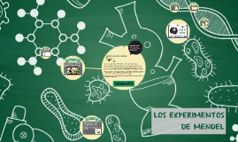 LOS EXPERIMENTOS Y LAS LEYES DE MENDEL