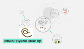 Roundworms: by Dylan Kuan and Daniel Vega