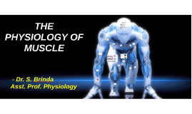THE PHYSIOLOGY OF MUSCLE