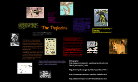 The Thylacine: Extinct Species
