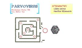 PARVOVIRUS CAPITULO 31