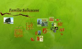 Familia Salicaceae