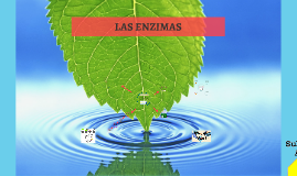 Copy of LAS ENZIMAS
