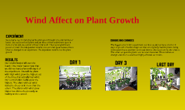 Wind Affect On Plant Growth