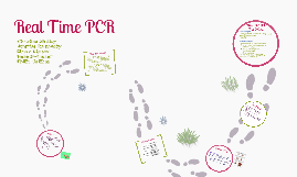 Copy of Real Time PCR