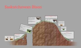 Saskatchewan Bison