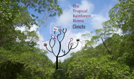 The Tropical Rainforest Biome: Climate