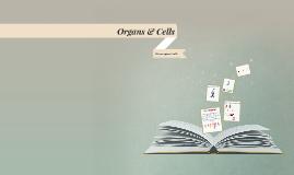 Organs & Cells