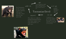 Tasmanian Devil Life Cycle Related Keywords Suggestions