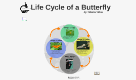 Copy of Life Cycle of a Butterfly