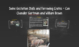 Swine Gestation Stalls and Farrowing Crates - Con