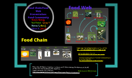Copy of Group 4 Block 4 Pond Community Food Chain/Food Web Project