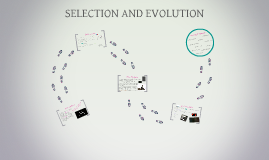 SELECTION AND EVOLUTION