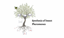 Synthesis of Insect Pheromones