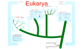 Copy of AP Bio-Biodiversity: The Eukarya