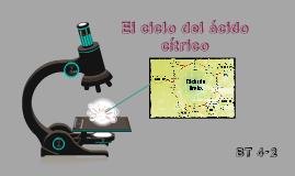 Copy of Ciclo del ácido cítrico