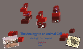 The Analogy to an Animal Cell
