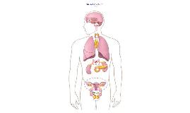 Copy of Anatomía del Sistema Endocrino