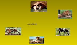 Αγρια ζώα